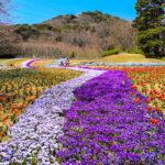 フォトアルバム:桜が開花を始めた火の山公園