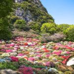 花まつり (御船山楽園)- つつじ、大藤、春もみじ