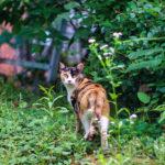フォトアルバム:集う野良猫たち