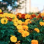 フォトアルバム:秋の勝山公園にて